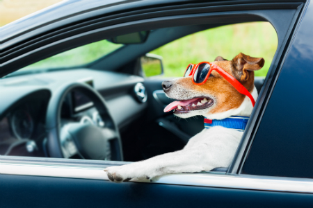 dog in driver's eat of car with paw out window and wearing sunglasses