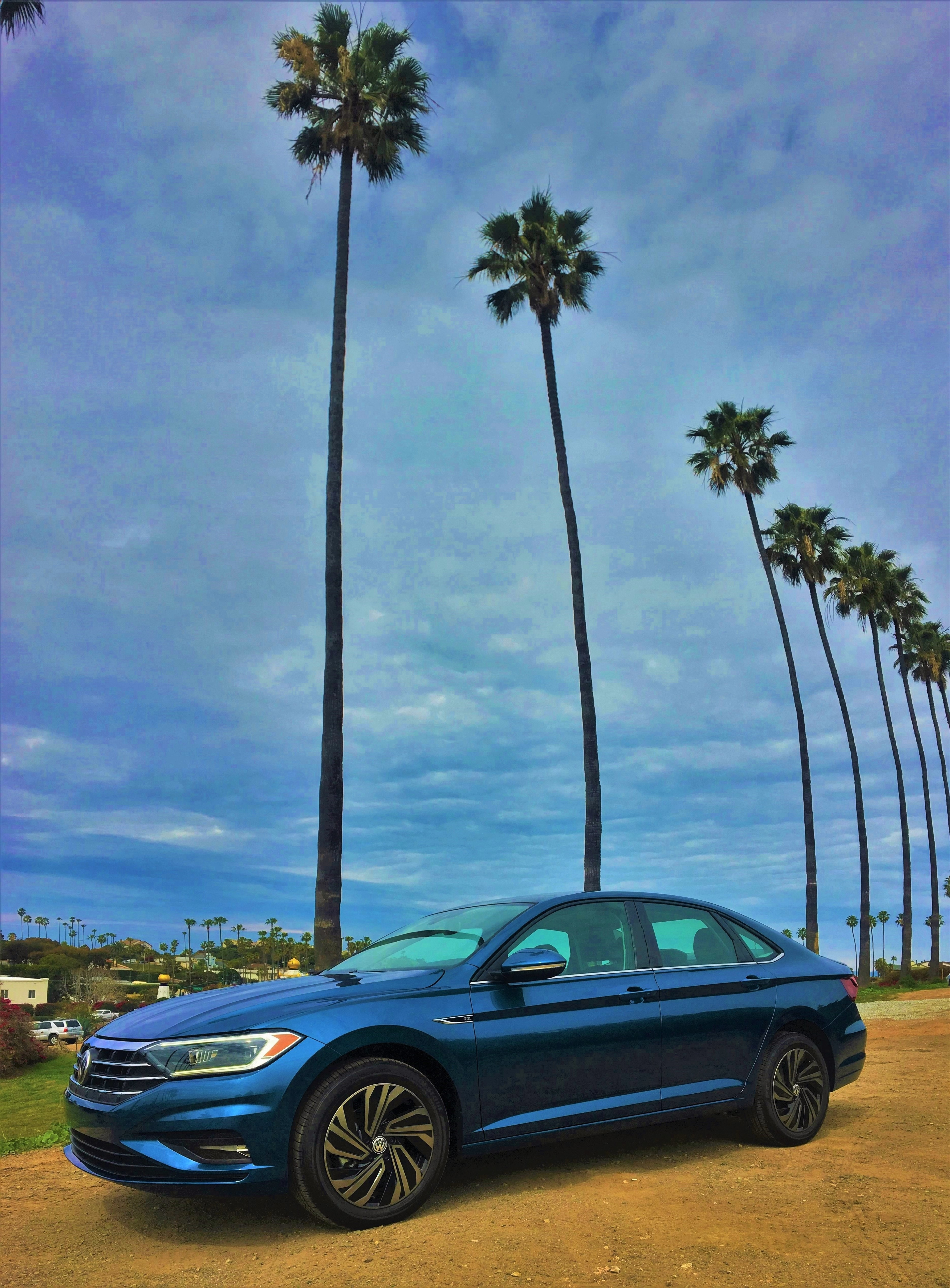 2019 Jetta Under Palm Trees