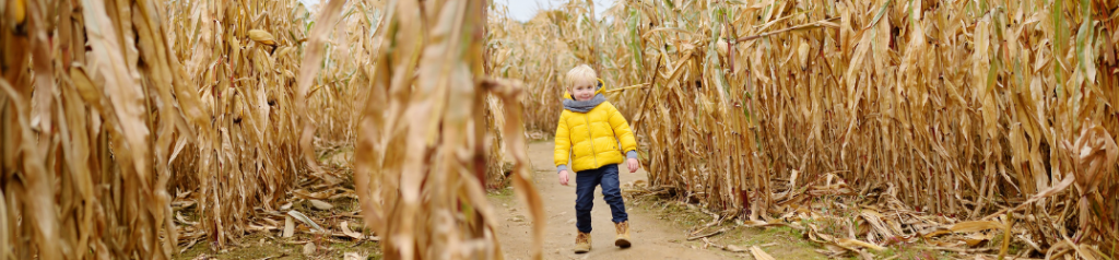 Young child walking through corn maze