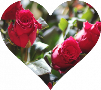 A picture of roses in the shape of a heart